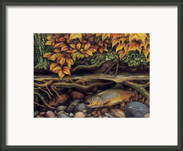 Autumn Brown Trout Framed Print By Jq Licensing