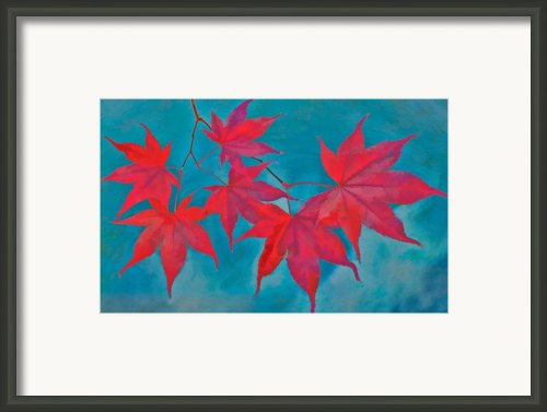 Autumn Crimson Framed Print By William Jobes