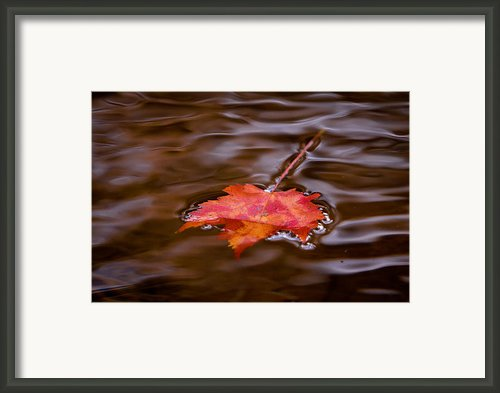 Autumn Framed Print By Darren Strubhar