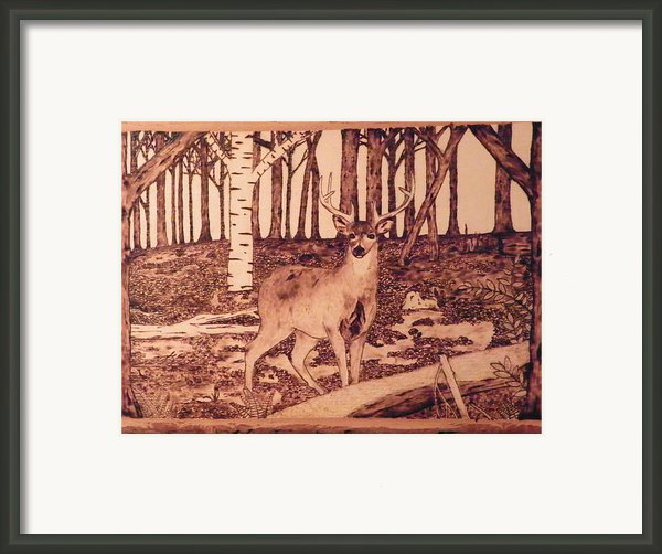 Autumn Deer Framed Print By Andrew Siecienski