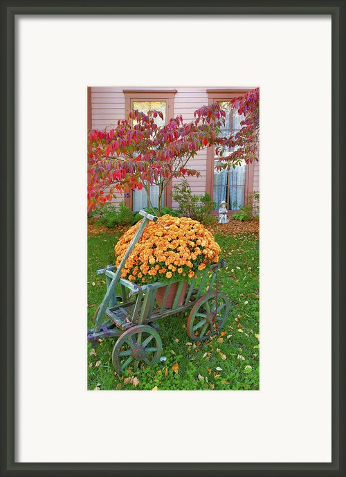 Autumn Display I Framed Print By Steven Ainsworth