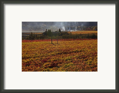 Autumn In Napa Valley Framed Print By Garry Gay
