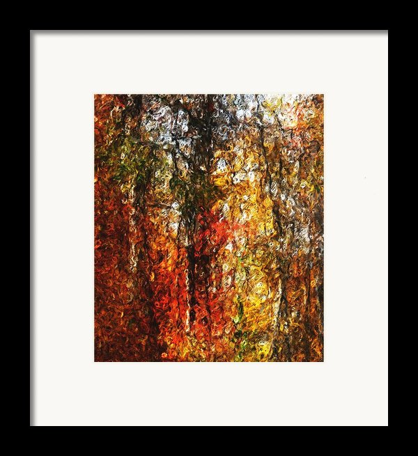 Autumn In The Woods Framed Print By David Lane