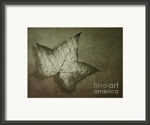Autumn Framed Print By Jan Pudney