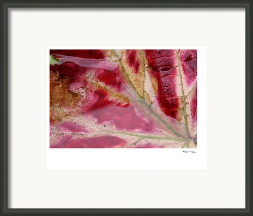 Autumn Leaf 3 Framed Print By Xoanxo Cespon