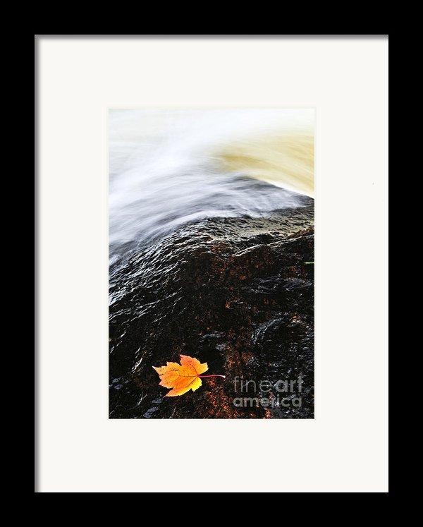 Autumn Leaf On River Rock Framed Print By Elena Elisseeva