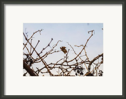 Autumn Leaf Framed Print By Saajid Abuluaih