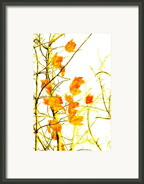 Autumn Leaves Abstract Framed Print By Andee Photography