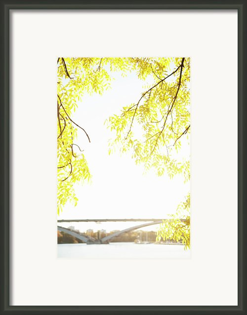 Autumn Leaves On Branch With Bridge In Background, Close-up Framed Print By Johner Images