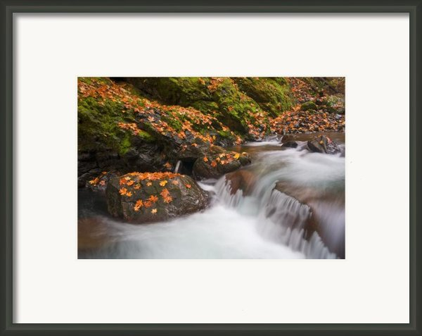Autumn Litter Framed Print By Mike  Dawson
