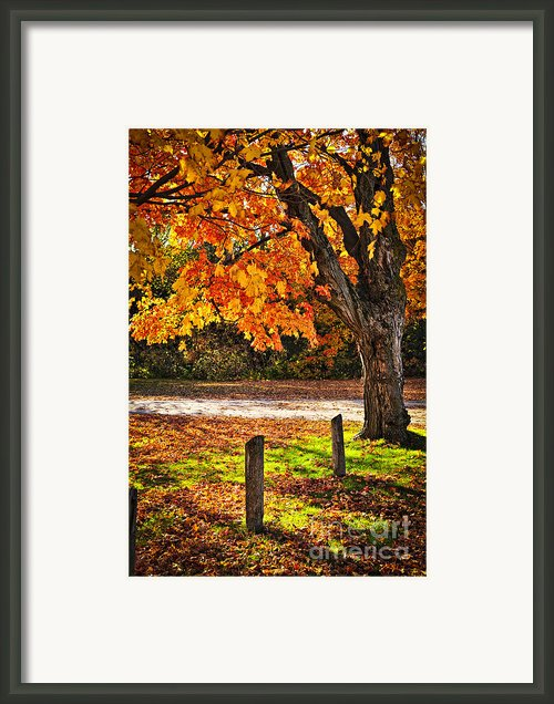 Autumn Maple Tree Near Road Framed Print By Elena Elisseeva