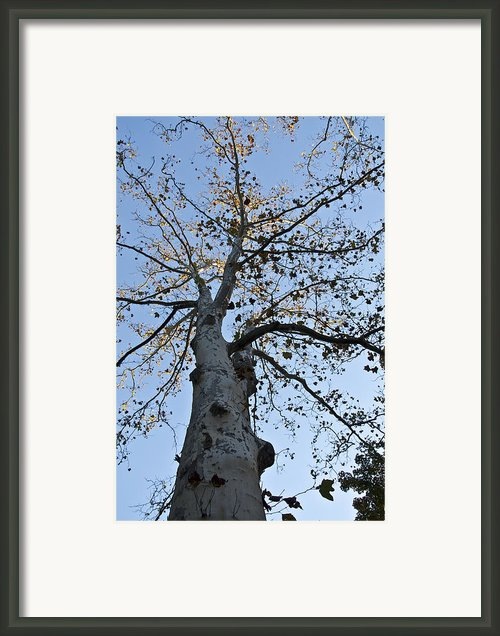 Autumn Oak Framed Print By Bill Cannon