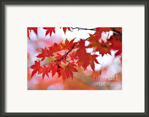 Autumn Pastel Framed Print By Kaye Menner