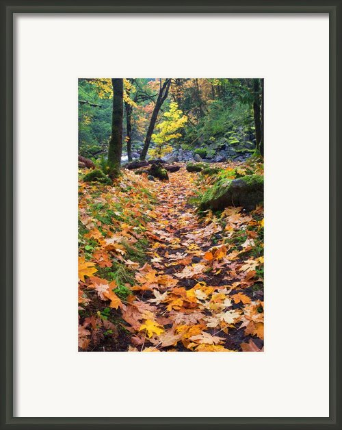 Autumn Path Framed Print By Mike  Dawson