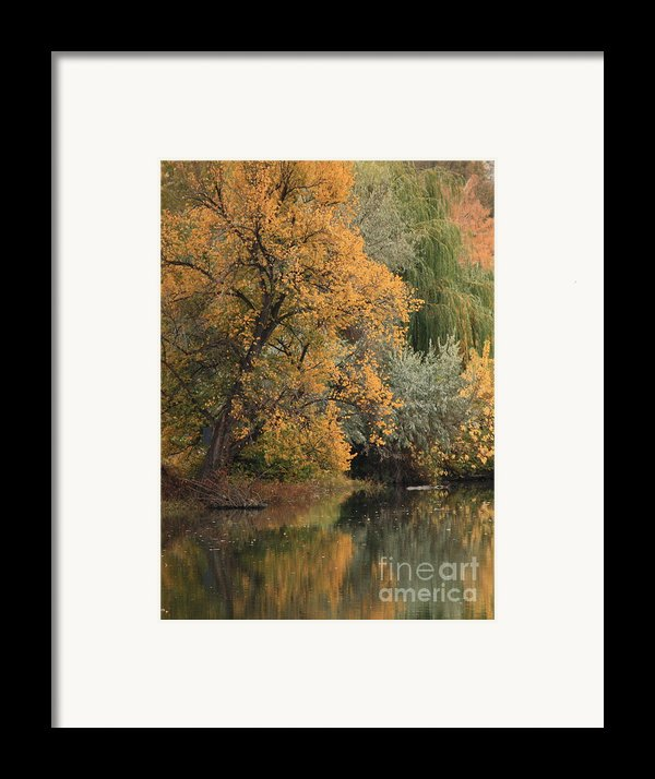 Autumn Riverbank Framed Print By Carol Groenen