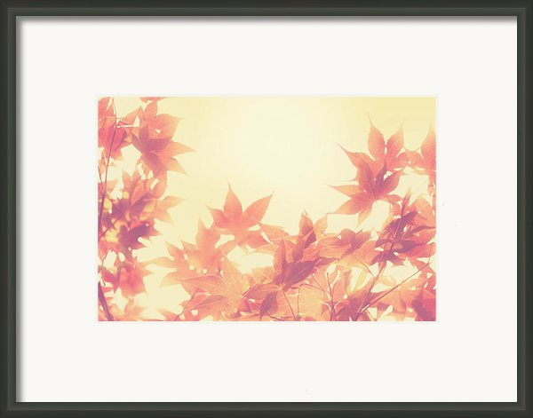 Autumn Sky Framed Print By Amy Tyler