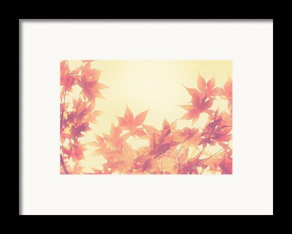 Autumn Sky Framed Print By Amy Tyler