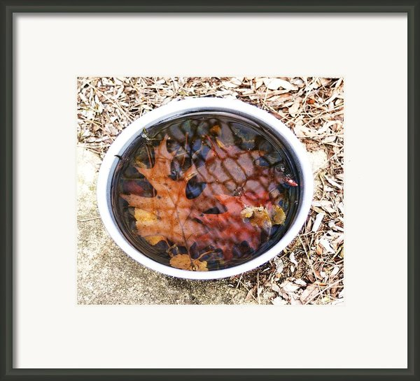 Autumn Soup Framed Print By Todd Sherlock