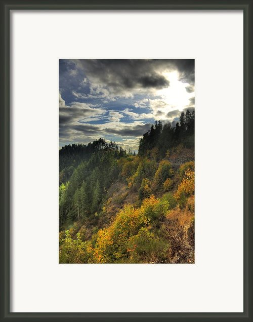 Autumn Sunlight Framed Print By Tyra  Obryant