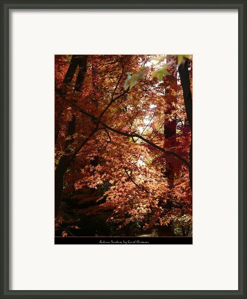 Autumn Sunshine Poster Framed Print By Carol Groenen