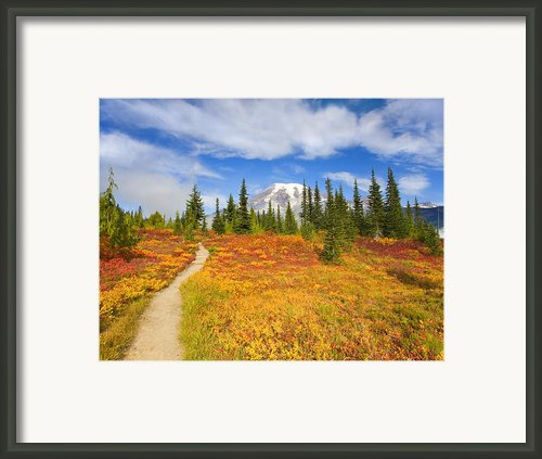 Autumn Trail Framed Print By Mike  Dawson