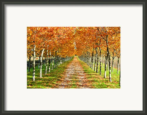 Autumn Tree Framed Print By Julien Fourniol/baloulumix