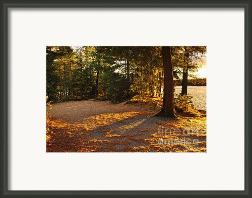 Autumn Trees Near Lake Framed Print By Elena Elisseeva