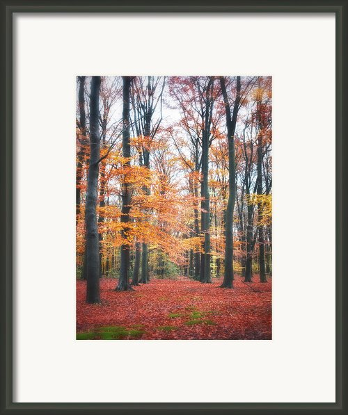 Autumn Whispers I Framed Print By Artecco Fine Art Photography - Photograph By Nadja Drieling