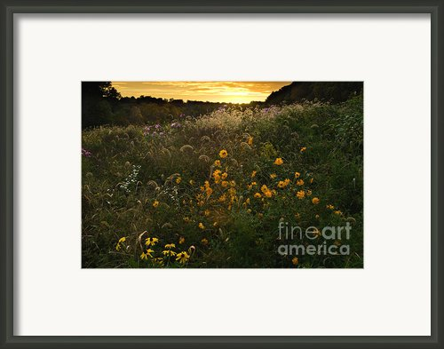 Autumn Wildflower Sunset - D007757 Framed Print By Daniel Dempster