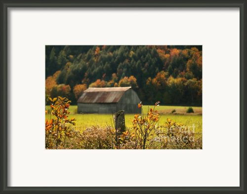 Autumns Colors Framed Print By Sandra Cunningham