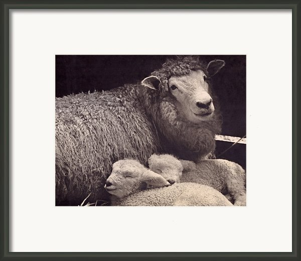 Babes In A Manger Framed Print By Sean Griffin