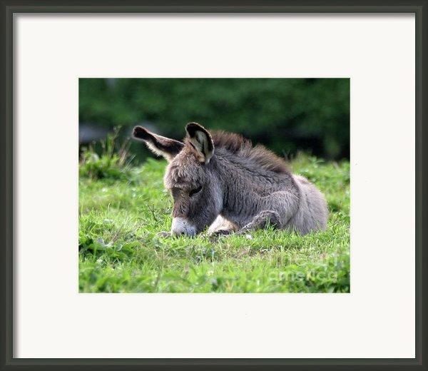 Baby Donkey Framed Print By Deborah  Smith