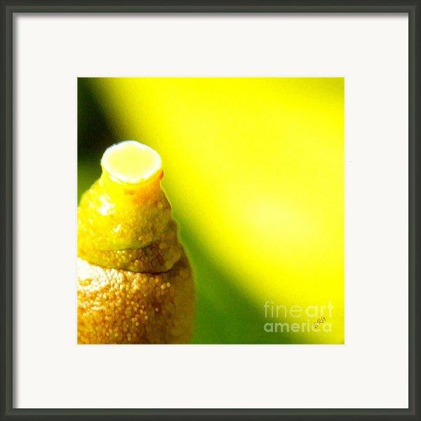 Baby Lemon On Tree Framed Print By Ben And Raisa Gertsberg