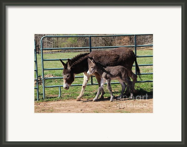 Baby Steps Framed Print By Pauline Ross