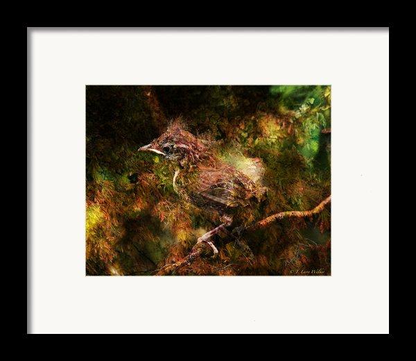 Baby Wren First Fly Framed Print By J Larry Walker