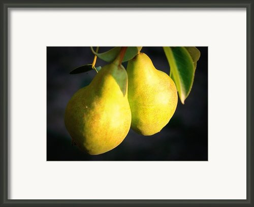 Backyard Garden Series - Two Pears Framed Print By Carol Groenen