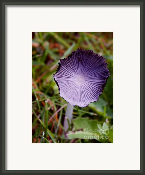 Backyard Mushroom Framed Print By Gail Salituri