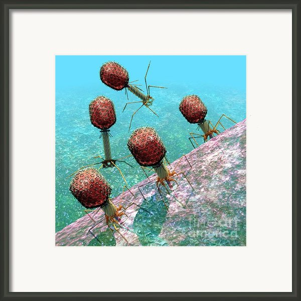 Bacteriophage T4 Virus Group 1 Framed Print By Russell Kightley