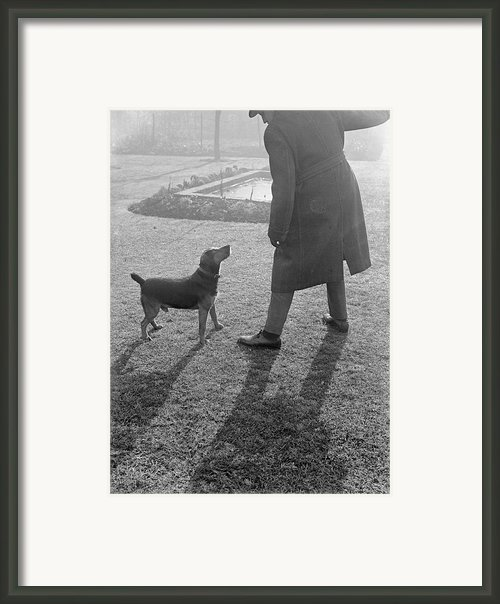 Bad Dog Framed Print By Chaloner Woods