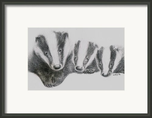 Badgers Framed Print By Lucy D