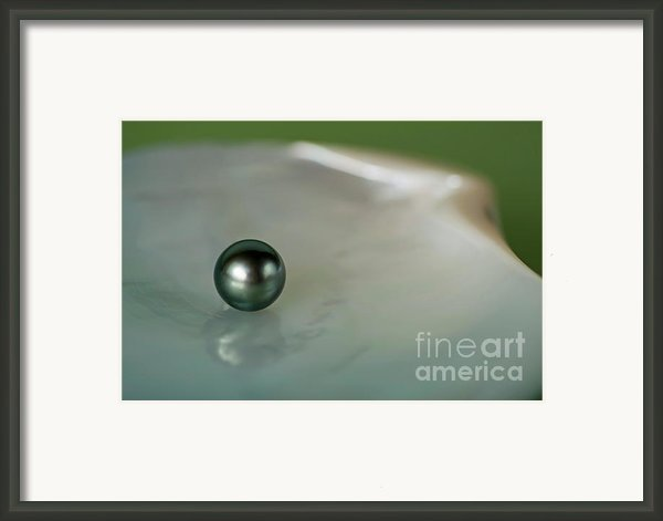 Balck Pearl On Oyster Framed Print By Sami Sarkis