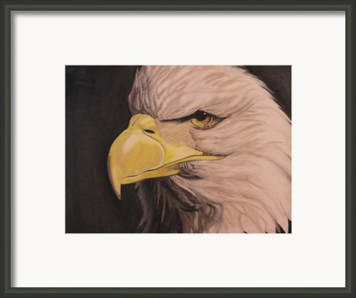 Bald Eagle Framed Print By Wil Golden