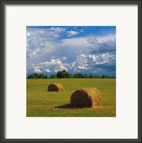 Bales Of Hay Framed Print By Elena Filatova