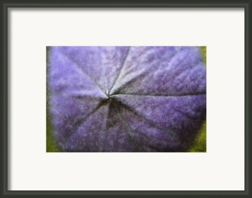 Balloon Flower Framed Print By Teresa Mucha