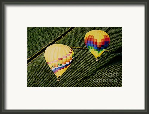 Balloons Over Napa Valley Framed Print By Cindy Lee Longhini