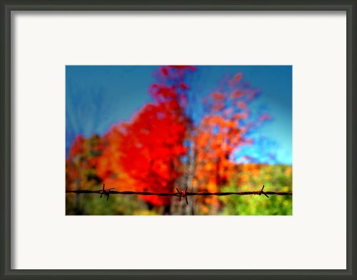 Barbwire Fall Framed Print By Emily Stauring