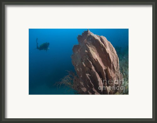 Barrel Sponge And Diver, Papua New Framed Print By Steve Jones