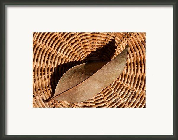Basket Of Brown Framed Print By Dan Holm