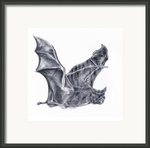 Bat Framed Print By Lucy D