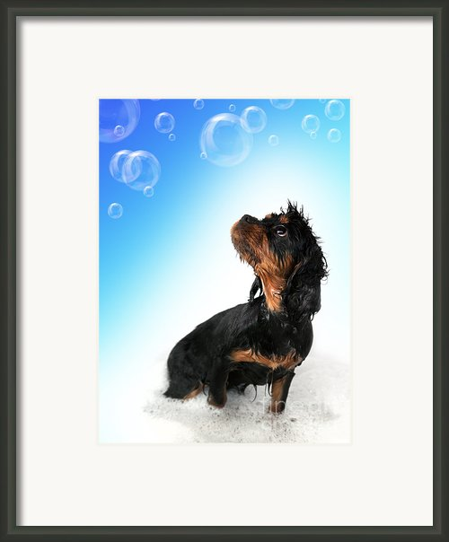 Bathtime Fun Framed Print By Jane Rix